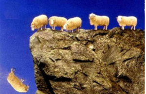 sheep_off_a_cliff